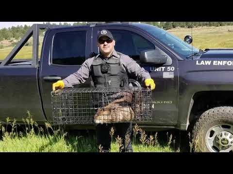 Relocating Beavers