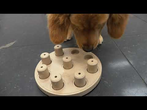 TPSB Daycare Puzzle #14 Molasses   Dog Smart