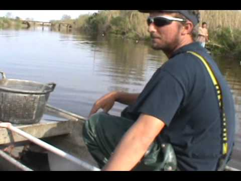 FISHING FOR CRAWFISH IN SOUTH LOUISIANA WITH NETS AND PIROUGE