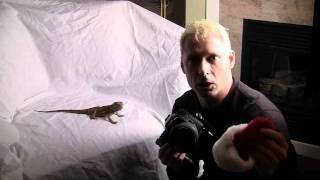 The photo warrior: dressing up a bearded lizard as santa claus