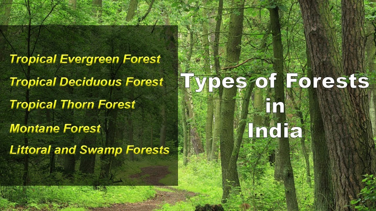 Tropical forests are the home to a huge number of animal species. Types Of Forests In India Evergreen Deciduous Thorny Montane Littoral Swamp Youtube