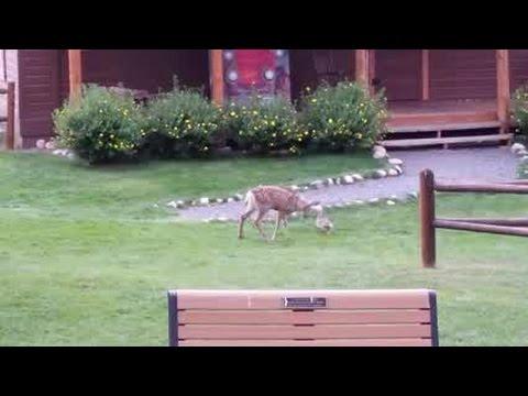 Sharon Green - Real Life Bambi and Thumper!