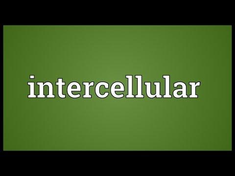 Header of intercellular
