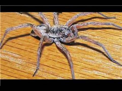Spiders in the United States : Identifying Spiders in Northern California