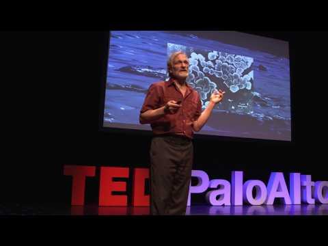 New, True and Important | Dr. Jonathan Trent | TEDxPaloAlto