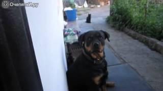 Хотел напугать собаку