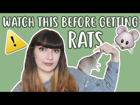 💡🐀 20 THINGS YOU SHOULD KNOW BEFORE OWNING RATS 🐀💡