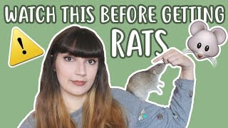 💡🐀 20 THINGS YΟU SHOULD KNOW BEFORE OWNING RATS 🐀💡