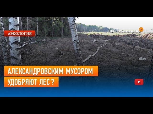 Александровским мусором удобряют лес?