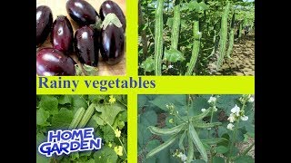 Rainy vegetables || Rainy vegetables || Best Grow vegetables