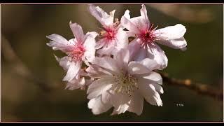 いくら寒くても花は咲く(冬の北山緑化植物園にて)