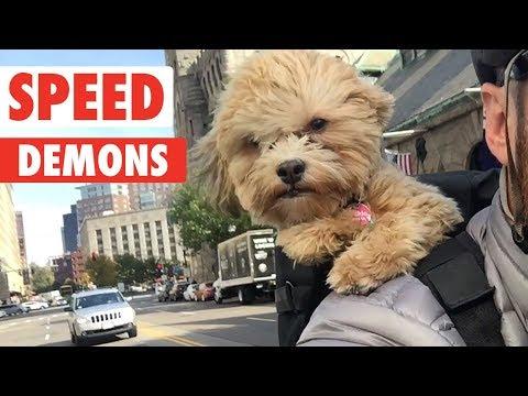 Speed Demons | Zoomies Pet Video Compilation