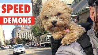 Speed Demons   Zoomies Pet Video Compilation