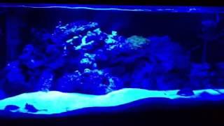 Reef / Saltwater Aquarium And Diy Blue Leds Part 2