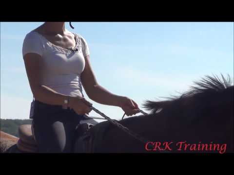 Exercise for Steady Reins