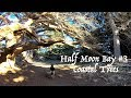 Beach Hiking and Coastal Trees - Hiking with German Shepherd Series Part 3 of 4