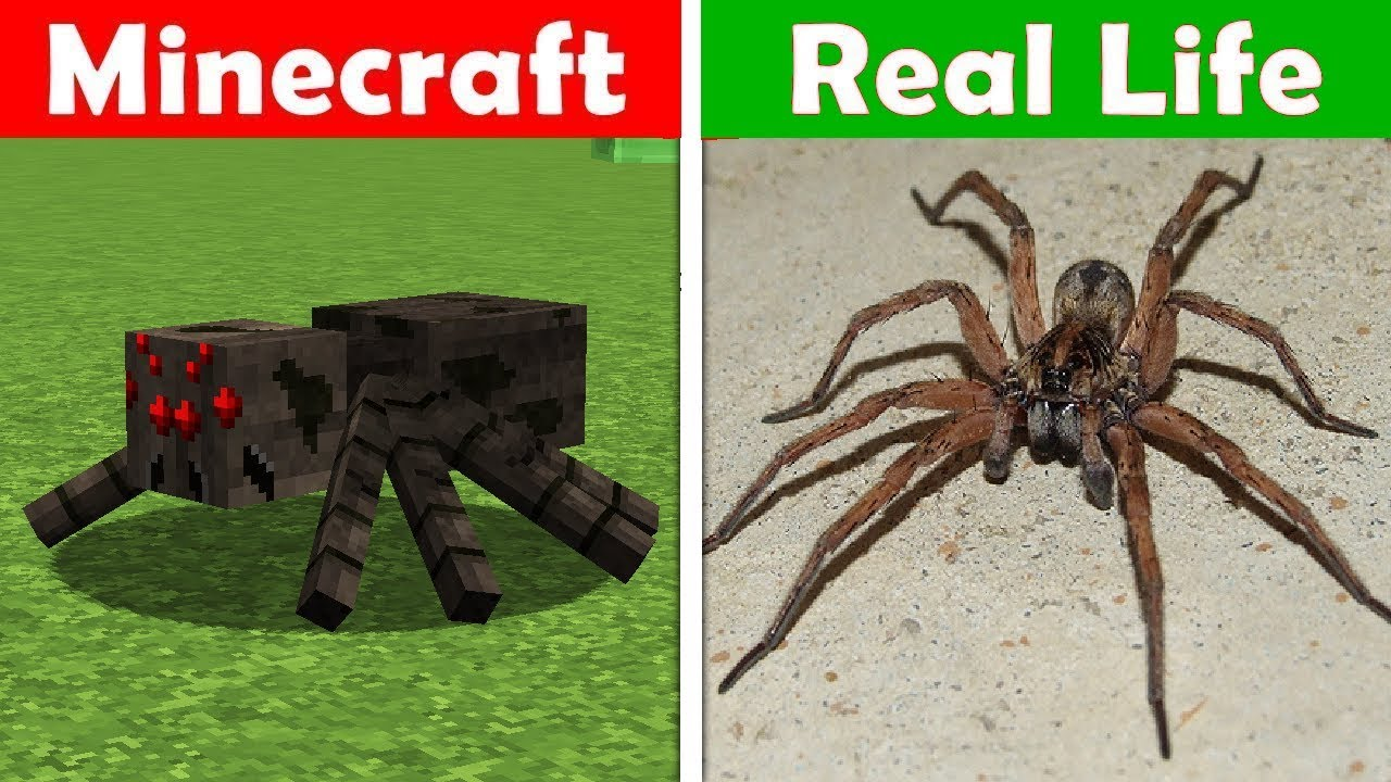 giant spider in real life minecraft vs real life