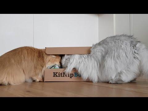 KITNIPBOX UNBOXING | SMOOTHIE GOES WILD