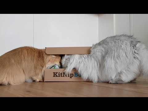 KITNIPBOX UNBOXING | SMOOTHIE GOES WILD