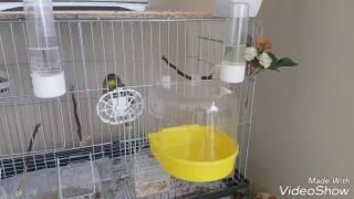 Kuşlarınıza BANYO verirken bunu UNUTMAYIN 🛑☝️