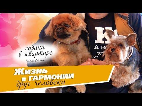 Вопрос: Какая порода собак подходит для проживания в квартире?
