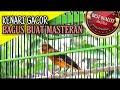 Kenari Gacor Suara Jernih  Mp3 - Mp4 Download