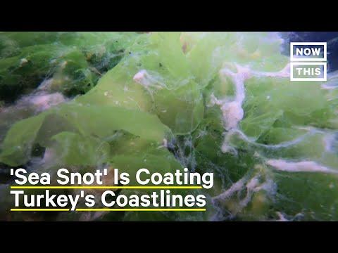 'Sea Snot' Is Destroying Turkey's Coasts