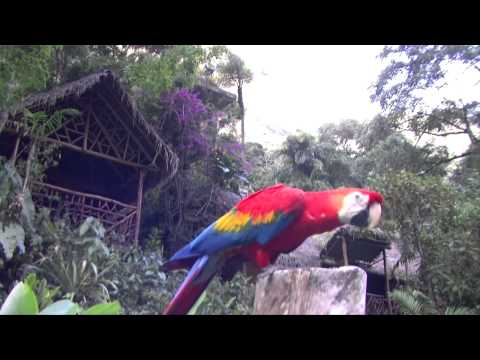SELVA CENTRAL  SAN RAMON - PERU