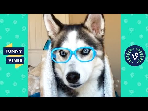 TRY NOT TO LAUGH - Cutest Animals of the Week! | Funny Videos 2019