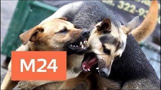 Волна нападений бродячих собак на людей прошла по Подмосковью - Москва 24