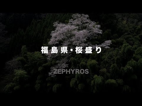 JAPAN  Fukushima Prefecture Cherry Blossoms 2017