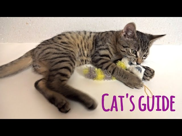 Cat's guide: How to be a majestic head of household