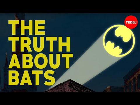 The truth about bats - Amy Wray