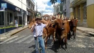 Tradição Encontro de carros de bois movimentam a cidade da Campanha