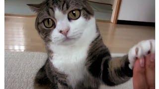 Смешной кот -   подборка / ★ 2013-14