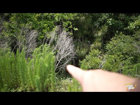 Florida Skunk Ape (New Evidence) aka Bigfoot, Sasquatch, Yeti