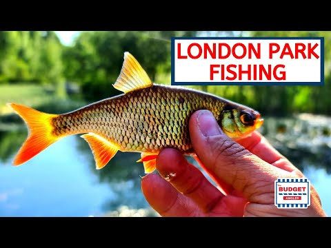 Fishing In Victoria Park London - Native Species