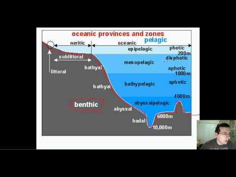 Ocean Life (Part 1): Types & Regions