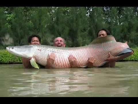 Крупнейшие рыбы в мире!