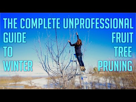 The Complete Unprofessional Guide to Winter Fruit Tree Pruning
