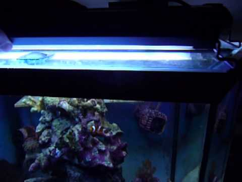 Girls coralife lunar aqualights compact fluorescent strip lights