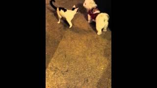 Cat attacks dog. Dog gets end revenge!