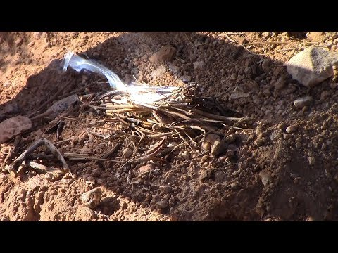 Solar Fire-Starting — Fast, Free, Forever Fires with Fresnel
