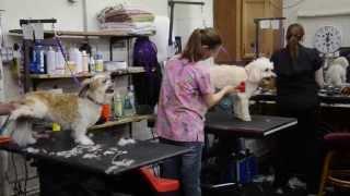 Franko's Dog & Cat Grooming