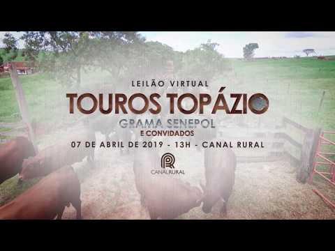 Leilão Touros Topázio Grama Senepol & Convidados Apresentação
