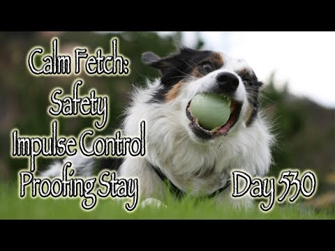 Day 530: Calm Fetch - Safety, Impulse Control and Proofing Stay