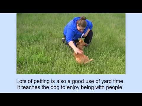 Dog Walking Training Video 7:  Dog Walking-Start to Finish