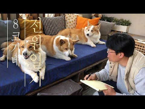 어떤-계단이-좋을지-얘기해봐-(견체공학-설계를-위한-인터뷰)-interview-with-the-pups-on-what-kind-of-stairs-work-best-for-them