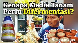 (Eps. 104) Alasan Media Tanam Perlu Difermentasi Sebelum Dipakai | Rimawan Vlog