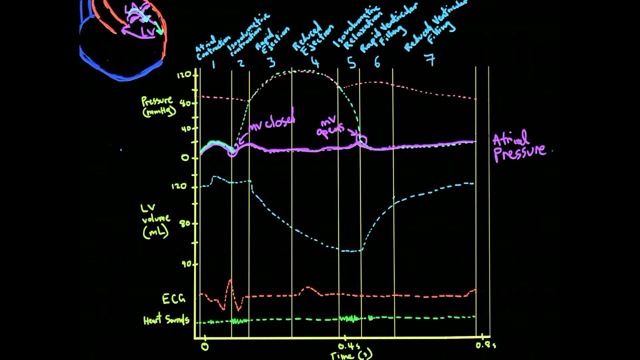 Khan Academy MCAT Vid 2: Pressures in the Cardiac Cycle - YouTube